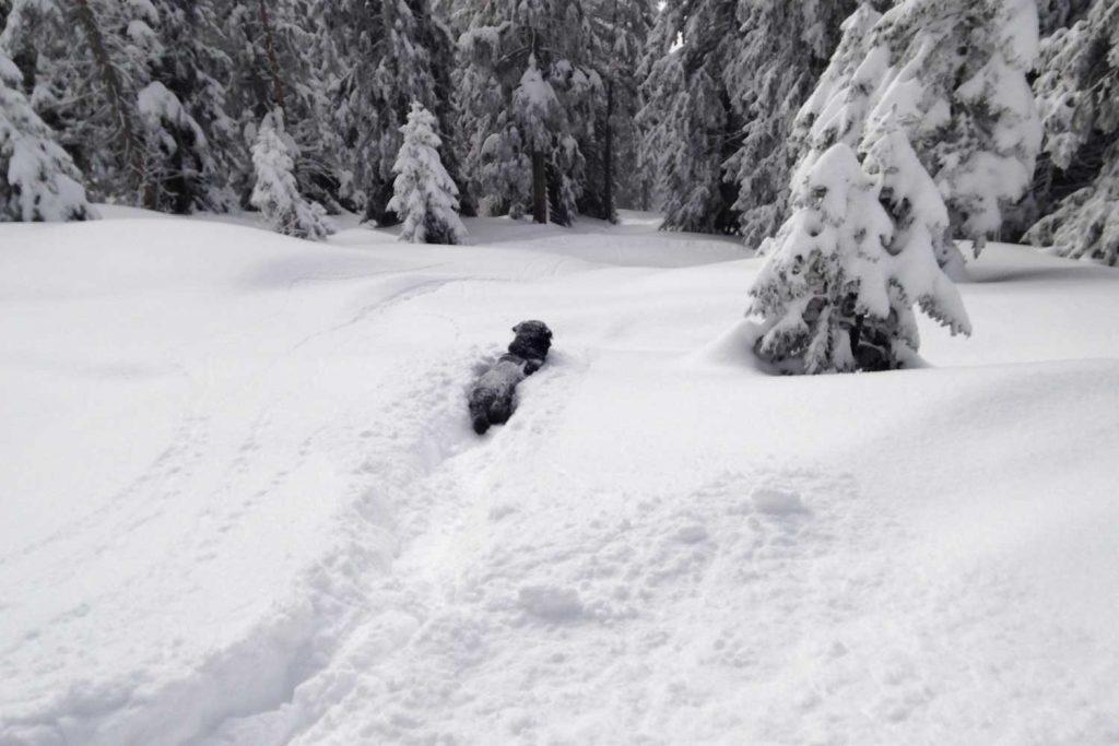 Skitour-für-Einsteiger-in-den-Chiemgauer---Spurarbeit