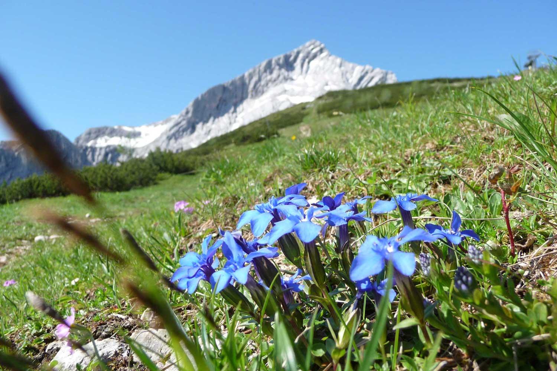 Wanderung-in-4-Tagen-durchs-Wetterstein---Ein-perfekter-Tag-mit-Blick-zur-Alpspitze