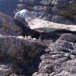 Watzmann-Ostwand---Schneefeld-in-der-Gipfelschlucht