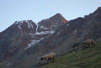 Ötztaler-Wildspitze---Blick-von-Süden-zum-Gipfel
