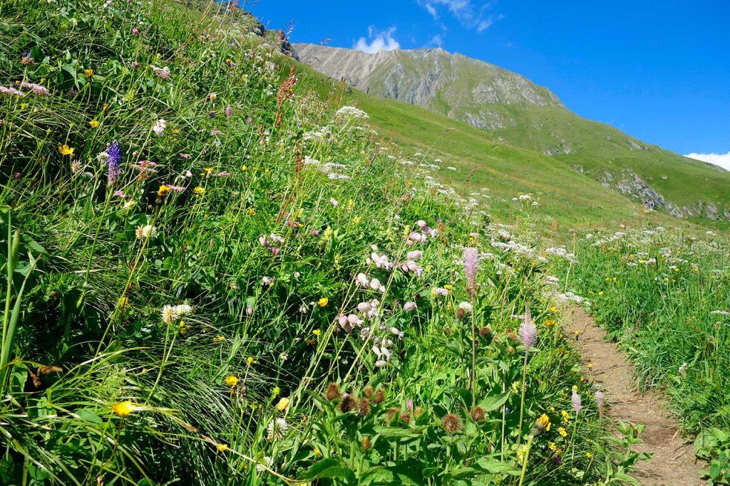 3-Tagestour-zum-Großvenediger---Blumenwiese-Katinmader-beim-Aufstieg-zur-Sajathütte