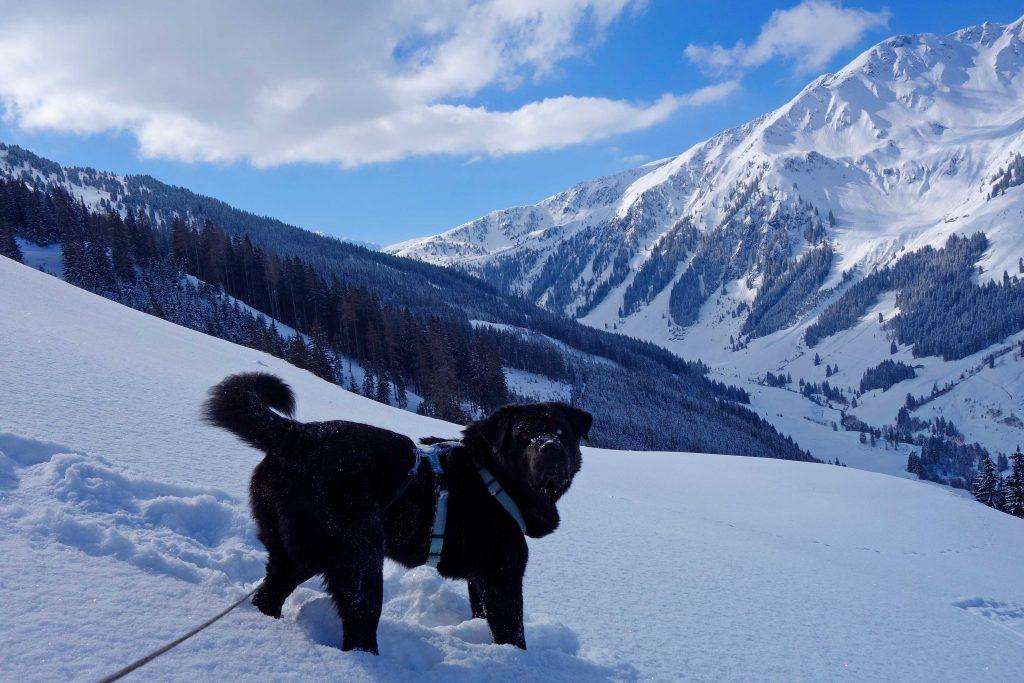 Skitour-in-den-Kitzbüheler-Alpen---Aufstieg-zum-Breiteggern