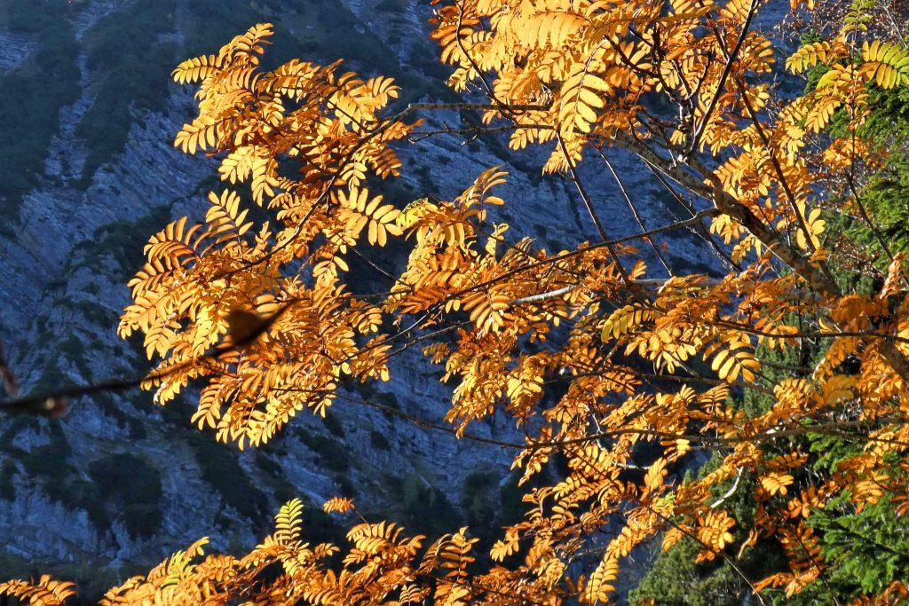 Dürnbachhorn-Nordrunde---Herbstleuchten